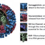 Perceiving H1N1 Symptoms In Adults And Children 2020,Flu,Symptoms,H1N1,ViRuS,H1N1PDM09,Childeren,Get,May,Influenza,Seasonal,People,See,Babies,Fever,Risk,Adults,Strain,Types,Pandemic,Now